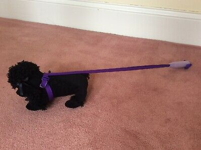 Soft Toy Poodle On A Lead • 6£