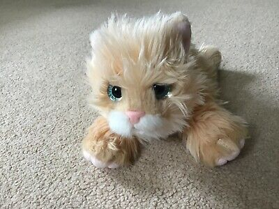 Cuddly Toy Kitten • 1.20£