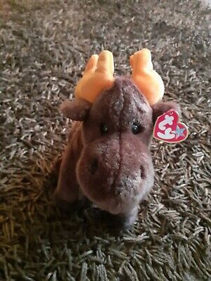 Ty Beanie Buddie  - Chocolate The Moose (1999) With Hanging Tags  • 12£