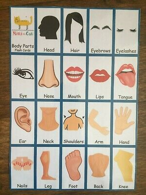19 Body Parts Flash First Words Cards Reading Writing Spelling Pre School Baby • 3.99£