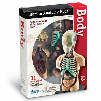 Learning Resources Human Body Anatomy Model Measures 11cm 3336 • 16.65£